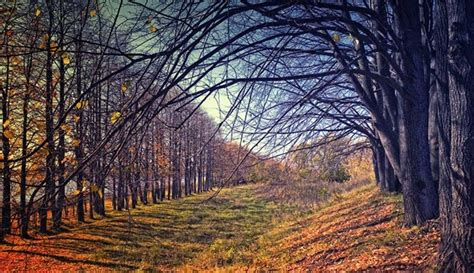 mind blowing fall    autumn amazing