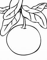 Coloring Cranberry Grapefruit Orange Mandarin Getcolorings Drawing Clipart Citrus Fresh Template sketch template