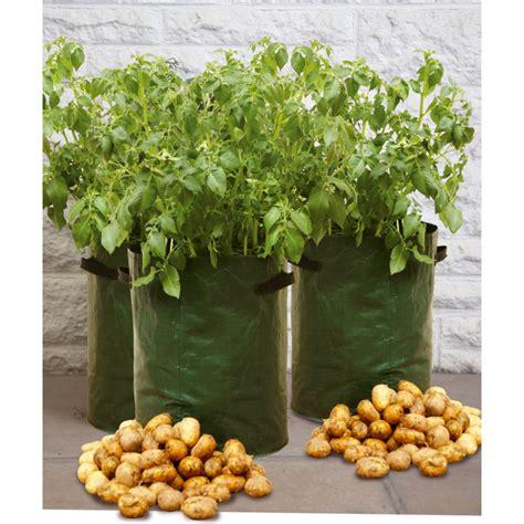 planter des pommes de terre sur balcon sans potager