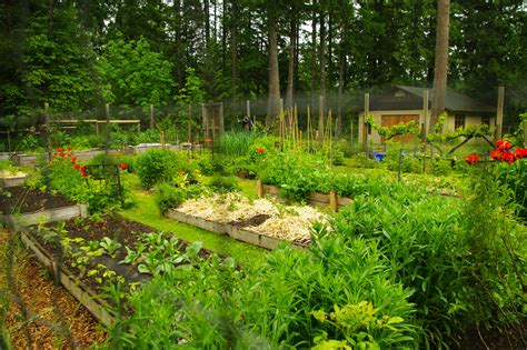 cowichan vally 2010 garden tour observations and