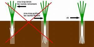 Repiquer Des Oignons : semer des poireaux d 39 hiver et les repiquer ~ Voncanada.com Idées de Décoration