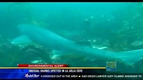 Unusual sharks spotted in La Jolla Cove - CBS News 8 - San ...