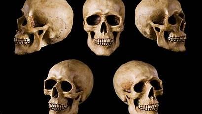 Skull Head Heads Wallpapers Skulls Collections Wallpapersafari