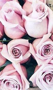 gabytaangeles | Flowers nature, Beautiful flowers, Rose