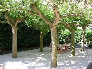 Kleine Bäume Für Vorgarten : besondere b ume f r kleine g rten lesen sie unsere tipps ~ Michelbontemps.com Haus und Dekorationen