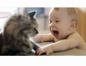 Babies Laughing Hysterically at Cats | Life With Cats