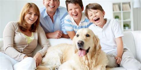 Glueckliche Haustiere Was Hunde Brauchen by Erstausstattung Hund Was Wirklich Wichtig Ist
