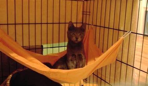 cat hammock diy diy cage hammock petdiys