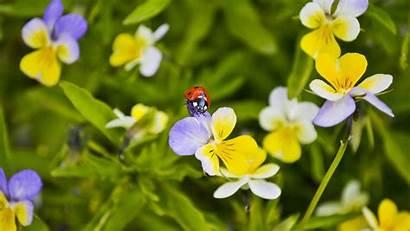 Flowers Ladybug Macro Di