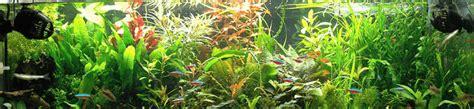 plante d aquarium d eau douce 10 plantes d aquarium d eau douce pour les d 233 butants