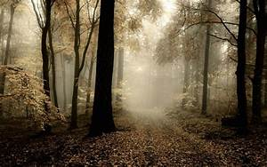 Nature, Landscape, Forest, Mist, Path, Leaves, Fall