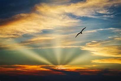 Sky Clouds Flying Sunset Bird Evening Nature