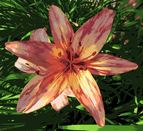 daylily colors color reducing a design using photoshop elements color