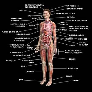 Diagram Of The Human Body Using Etymologies
