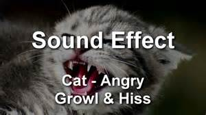 cat sounds mp3 cat angry growl hiss sound effect