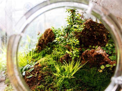 where to buy moss for terrariums diy terrarium moss graffiti 28 moss and succulent terrarium garden