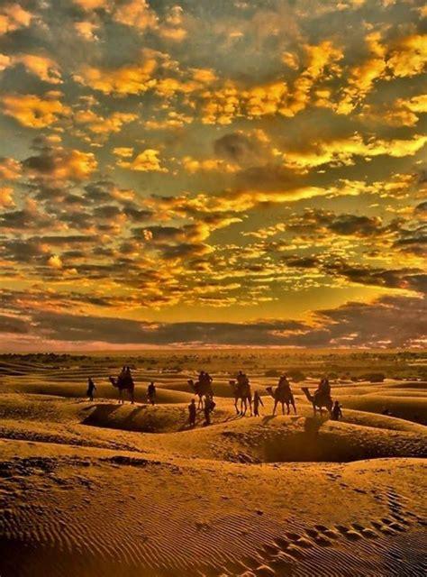 Die Besten 25+ Kamel Ideen Auf Pinterest  Kamele, Lachen