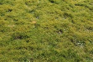 Rasen Säen Ab Wann : wann den rasen vertikutieren und d ngen das gartenmagazin ~ Lizthompson.info Haus und Dekorationen