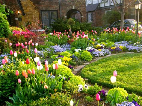 Tulip Season  Front Yard Garden  Curb Appeal Flowers
