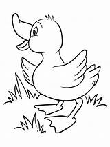Duck Coloring Pages Animals Printable sketch template