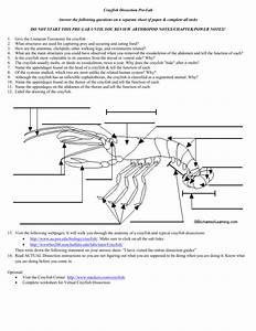 Life Cycle Of A Crayfish Worksheet