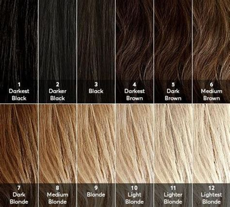 My Hair Is Brown by Hair Level Chart Great To Your Base Or Starting