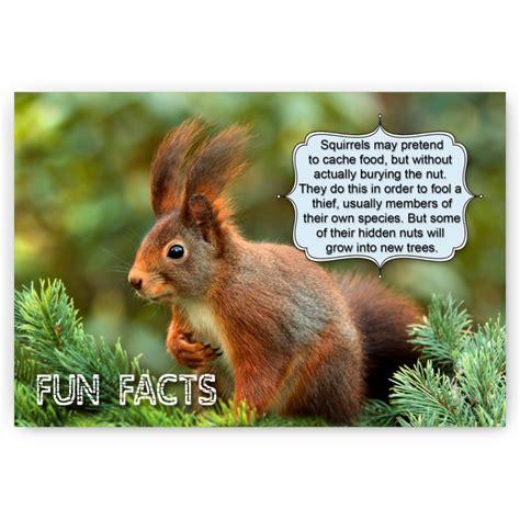 Animal Fun Facts postcards