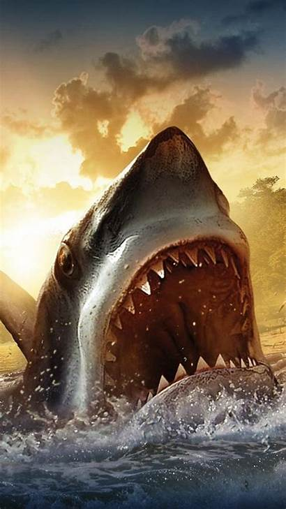Iphone Wallpapers Shark Cool Sharks Animal Plus
