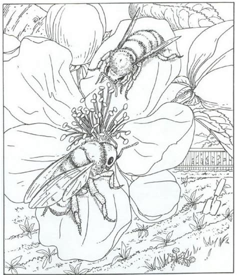 honey bee adult pages coloring sketch coloring page