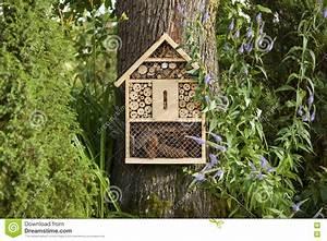 Insekten Im Haus : insekten im haus winzige insekten im haus bitte dringend ~ Lizthompson.info Haus und Dekorationen