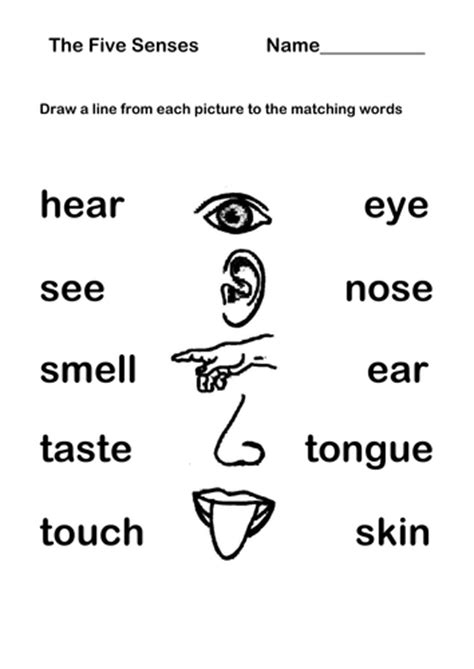 science eyfs ks1 the five senses by learnerslabyrinth teaching resources tes