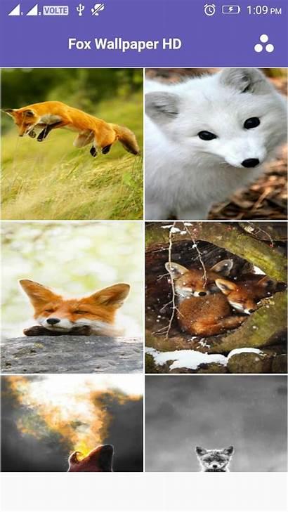 Fox Roblox Arctic Head Codes 4k Amazonca