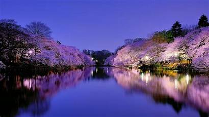 Osaka Park Wallpapers Blossom Cherry Japan Lake
