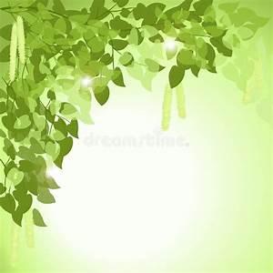 Branche De Bouleau : branche d 39 un arbre de bouleau avec des feuilles ~ Melissatoandfro.com Idées de Décoration