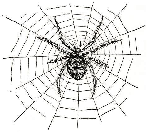 free clipart for websites best spider web clipart 4403 clipartion