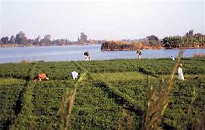 Image Gallery nile crops