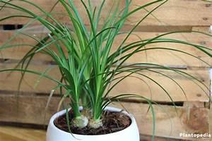 Blühende Zimmerpflanzen Pflegeleicht : zimmerpflanzen die wenig licht brauchen gr ne und ~ Michelbontemps.com Haus und Dekorationen