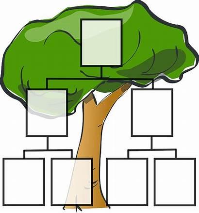 Stammbaum Vorlage Tree