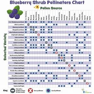 Pollination Charts for Fruit-bearing Trees and Shrubs My