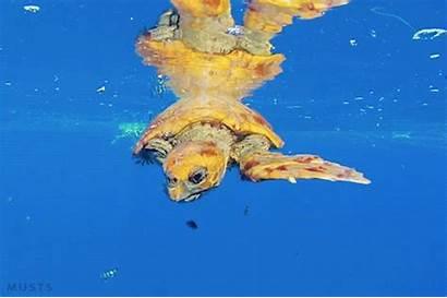 Sea Turtle Plastic Animals Gifs Pollution Animated