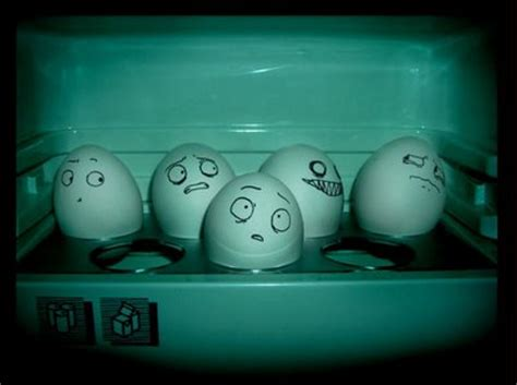 Eggs In The Fridge Or Cupboard by Should Eggs Be Kept In The Fridge Or Not 171 Appliances