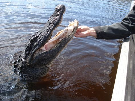 Everglades Airboat Tour Captain Doug by Captain 180 S Airboat Tours Florida Stopover