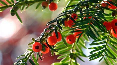 Giftige Pflanzen & Giftige Blumen Im Eigenen Garten?