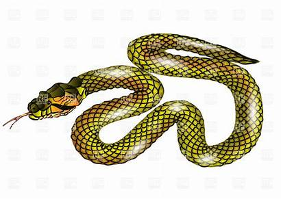 Snake Clipart Clip Scaled Vector Background Clipartpanda