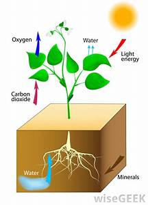 What Is The Connection Between Chlorophyll And Magnesium