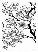 Coloriage Cherry Blossom Fleur Marcytilton Enregistree Depuis sketch template