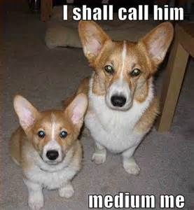 Memes Funny Cute Corgi Wallpaper