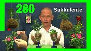 Bonsai Im Glas : bonsai der w stenrose anzucht im glas der sukkulenten youtube ~ Eleganceandgraceweddings.com Haus und Dekorationen