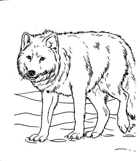 realistic animal coloring pages animal coloring pages for adults bestofcoloring
