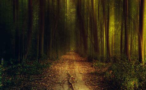esprit forest fond decran large de beaux paysages pour